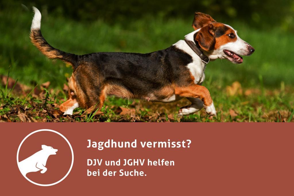 """DJV und JGHV starten Online-Projekt """"Jagdhund vermisst"""""""